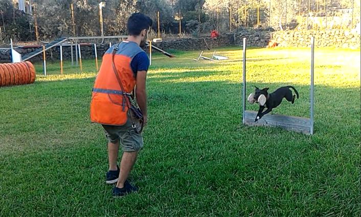 addestramento per cani