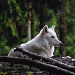 L' Addestramento del Cane