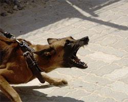 aggressività cani