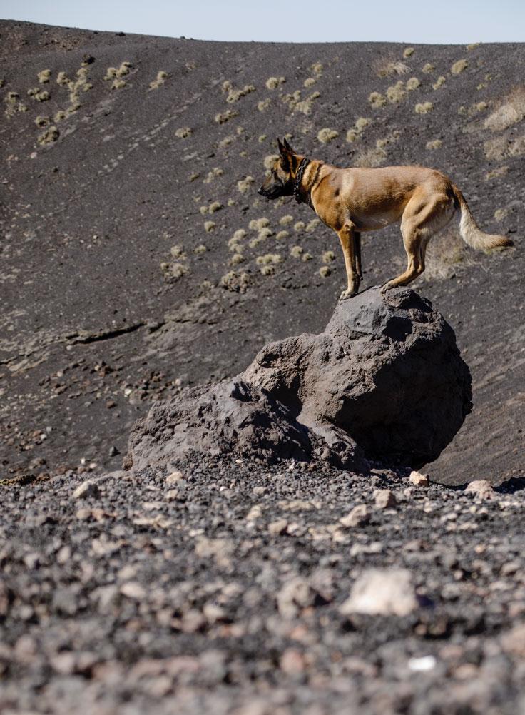 malinois sulla roccia