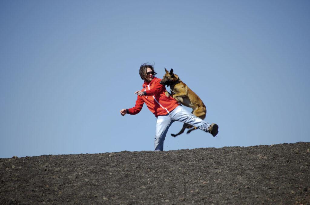 pastore belga che salta